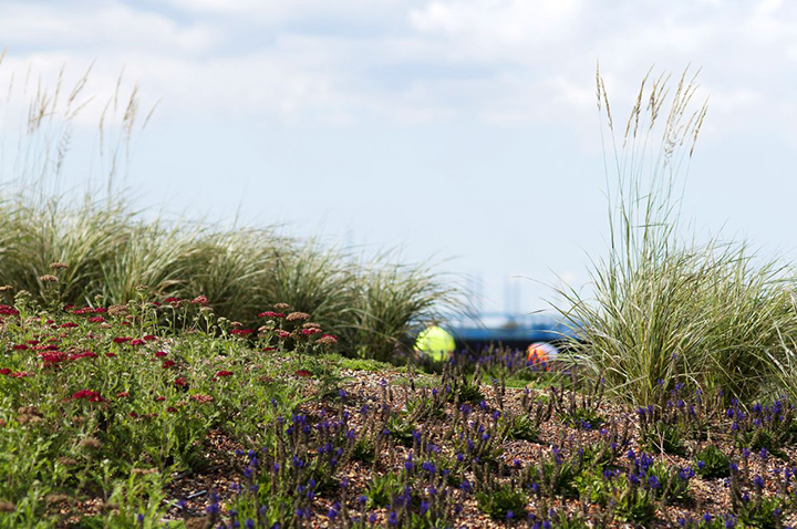 Gröna tak för ekologisk hantering av dagvatten